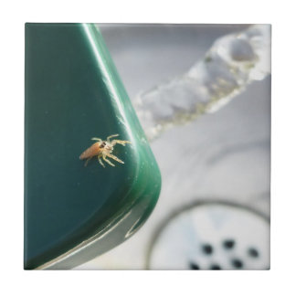Spider on water foutain ceramic tile