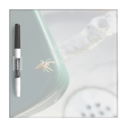 Spider on water foutain Dry-Erase board