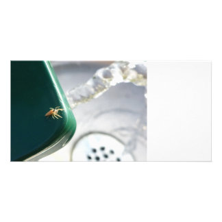 Spider on water foutain photo card