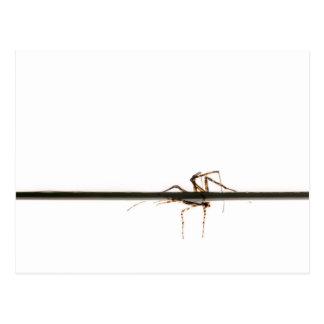 Spider on water postcard