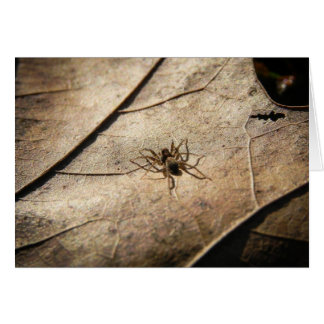Spider on Weathered Leaf Greeting Card