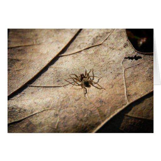 Spider on Weathered Leaf Card