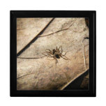 Spider on Weathered Leaf Gift Box