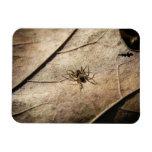 Spider on Weathered Leaf Magnet