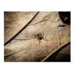Spider on Weathered Leaf Post Card