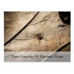 Spider on Weathered Leaf Post Cards