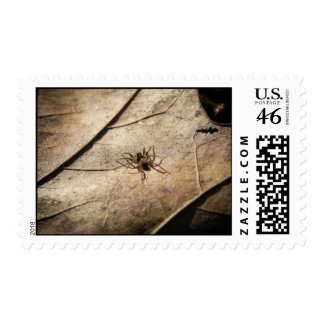 Spider on Weathered Leaf Postage Stamps