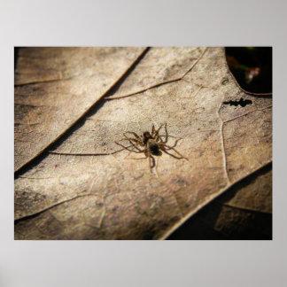 Spider on Weathered Leaf Poster