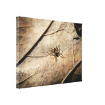 Spider on Weathered Leaf Stretched Canvas Print