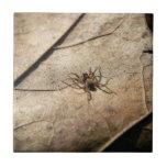 Spider on Weathered Leaf Tile