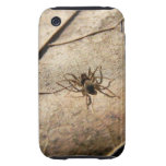 Spider on Weathered Leaf Tough iPhone 3 Cases