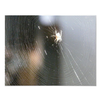 spider on web card