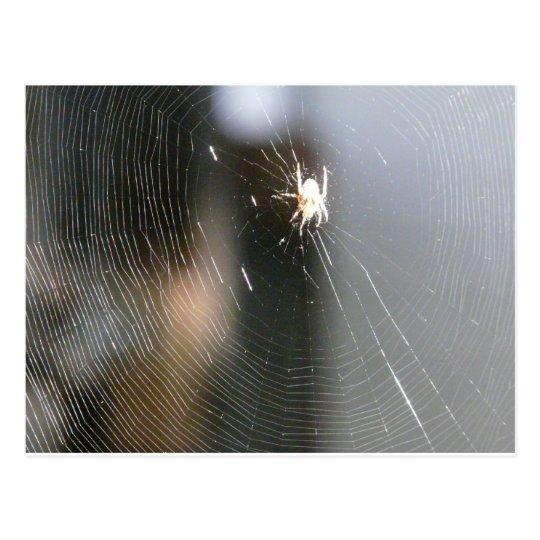 spider on web postcard