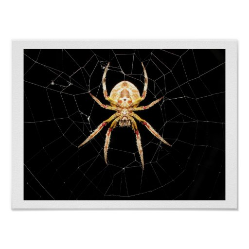 Spider On Web Posters