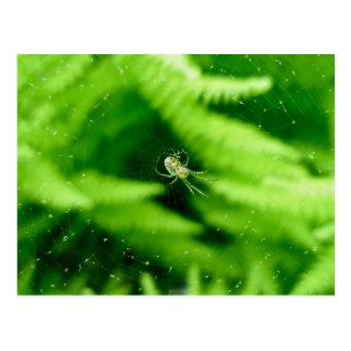 Spider Orb Weaver on Ferns Postcard