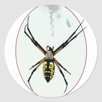 Spider orb yellow black animals wild arachnid classic round sticker