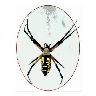 Spider orb yellow black animals wild arachnid postcard