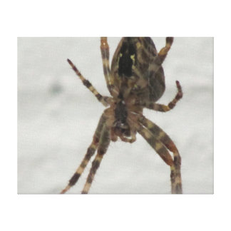 Spider photo stretched canvas print