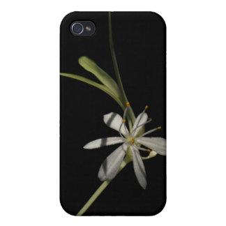 Spider Plant Flower ~ case