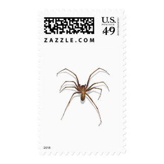 Spider Postage Stamp