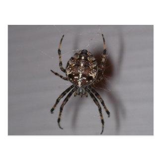 spider postcard