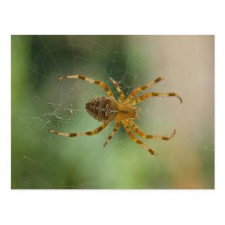 Spider - postcard