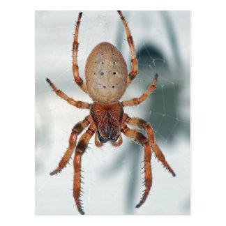 Spider Postcard. Postcard