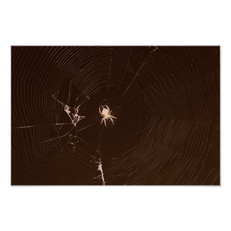 Spider Print