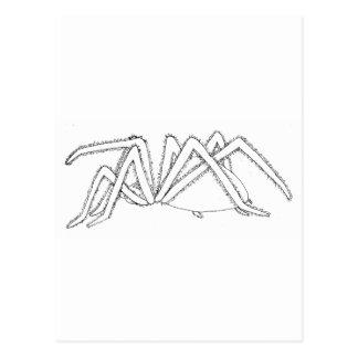 spider side view postcard