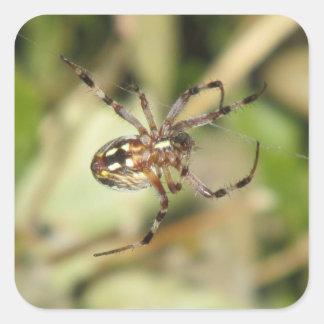 Spider Square Sticker