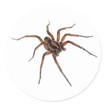 Spider stickers