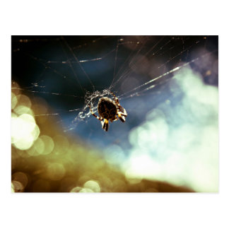Spider Themed, A Spider Weaving Its Web To Catch T Postcard