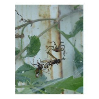 Spider & Wasps Postcard