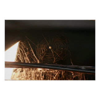 Spider Web in Hay Loft Posters