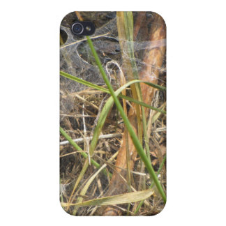 Spider Web In The Grass Case iPhone 4 Covers