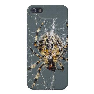 Spider & Web iPhone Cases