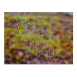 Spider Web of Pearls Post Cards
