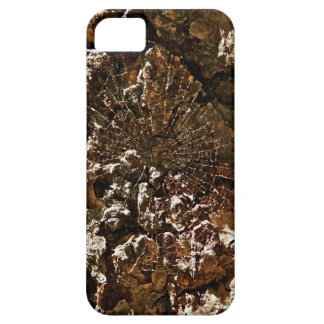 SPIDER WEB ON A SEQUOIA TREE BARK iPhone SE/5/5s CASE
