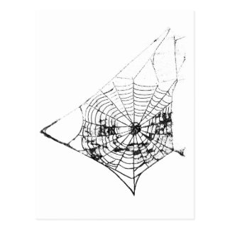 Spider Web The MUSEUM Zazzle Postcard