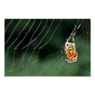Spider Web Weave 12x8 Poster