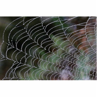 Spider web with dew texture standing photo sculpture