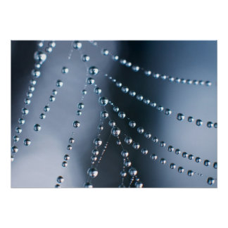 Spider Web with Droplets Poster