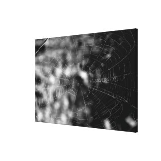 Spider webs make compelling shapes. stretched canvas print