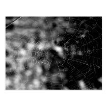 Spider webs make compelling shapes. postcard