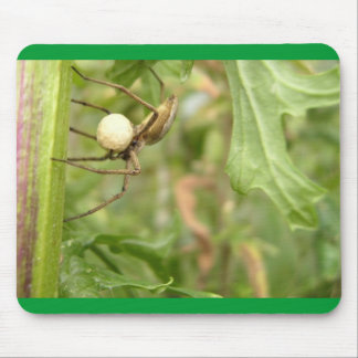 Spider with eggs mouse pad
