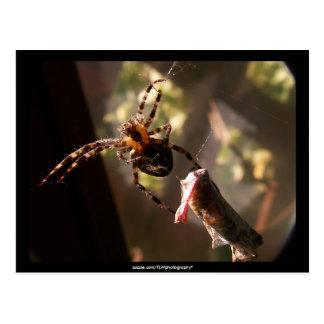 Spider with grasshopper -  Postcard