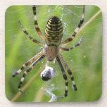 Spider with prey coaster