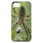 Spider with prey iPhone 5 cases