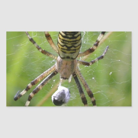 Spider with prey rectangular sticker