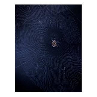 Spider World Wide Web Postcard